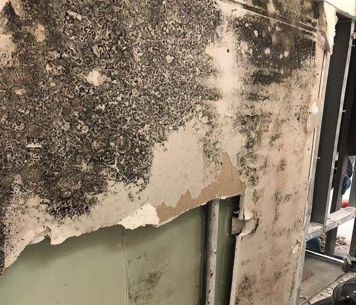Mold growing in Broomfield bathroom